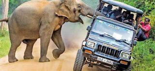 elephant attack video No-01