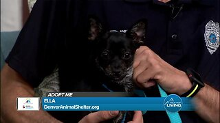 Adopt Ella Today At The Denver Animal Shelter