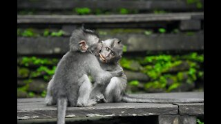 Cute Looking Monkeys Having A Good Time
