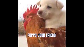 puppy your friend