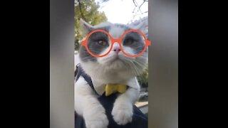 Cute cats Talking 2021