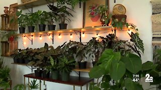 Plant shop featuring local artists opens during pandemic