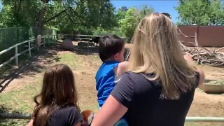 Same animals, fewer people: Denver Zoo reopens to members