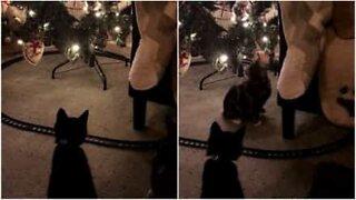 Sådan holder du katten væk fra juletræet