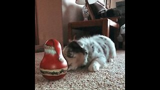 Adorable showdowns: Aussie puppy takes on Santa ornament