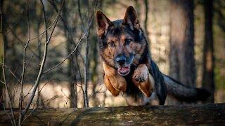 Modern Dog Training - K9 Dog Training