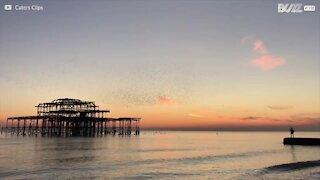 Tusindvis af fugle flyver over mole under en smuk solnedgang