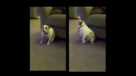 Dancing dog - really beautiful