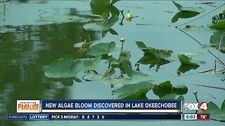 New algae bloom found in Lake Okeechobee