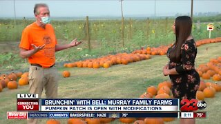 Brunchin' with Bell: Murray Family Farms Pumpkin Patch