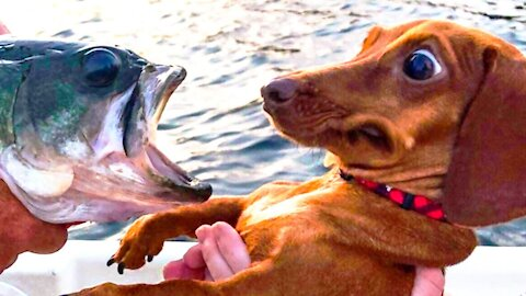 Funny Dogs and Cats - Funny and fantastic videos of animals - it's worth laughing a lot 2021