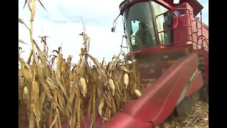 Corn prices increase to 8-year highs