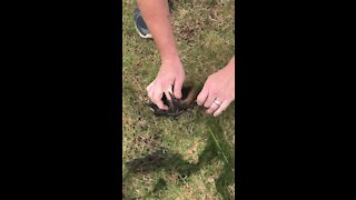 Duck rescued from certain death after getting tangled in lawn netting