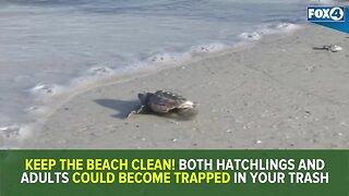 Red tide's impact on 2019 sea turtle nesting season