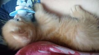 Adorable kitten loves its pacifier