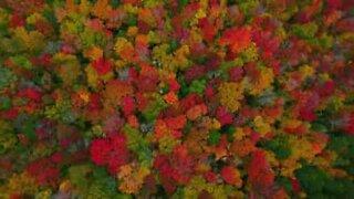 Høsten skaper et fargerikt landskap