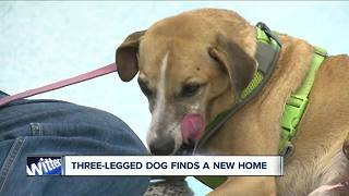 Special needs dog finds a new home