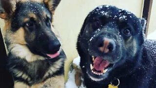 Dogs have fun in speed eating challenge