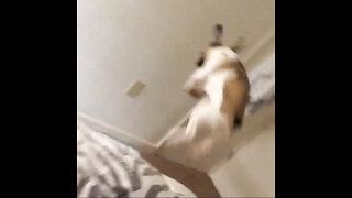 Puppy bunny hop!