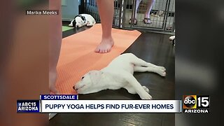 Puppy yoga helps dogs find fur-ever homes