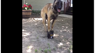 Talented Dog Flawlessly Balances On Small Tin Can