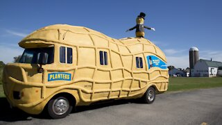 Planters Hiring Drivers For 'Nutmobiles'
