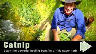 Health Benefits of Catnip
