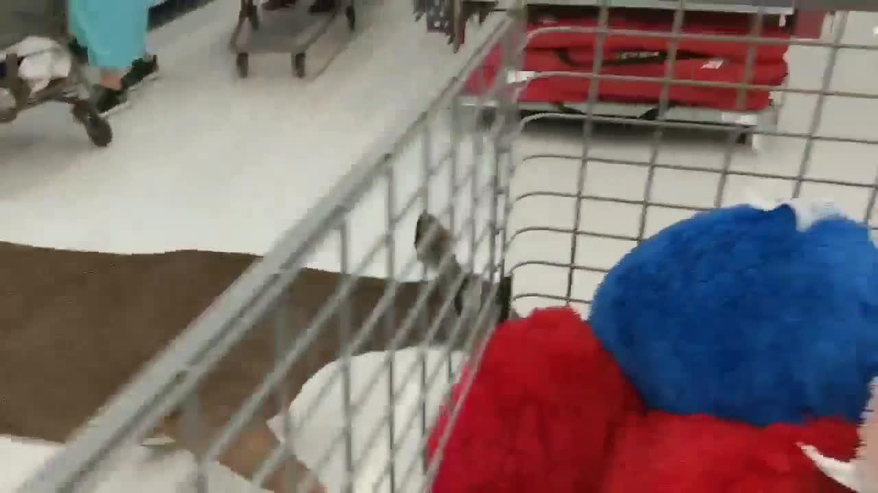 Wooster Walmart customers help employees catch deer on the loose inside store
