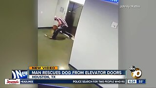 Man rescues dog as leash gets caught on elevator