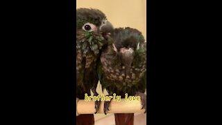 Cute Parrots After Shower