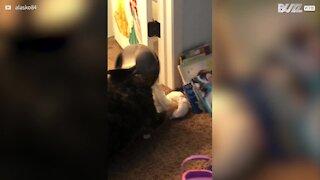 Cagnolina sorpresa a tentare di mangiare la spazzatura