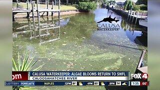 Algae blooms return to Caloosahatchee River