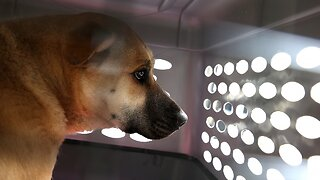 House Passes Bill That Makes Animal Cruelty A Federal Felony