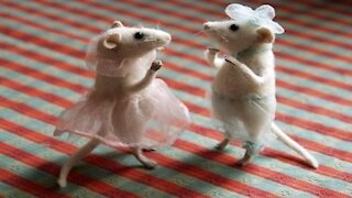 Funny Rat dance 2021 Dance