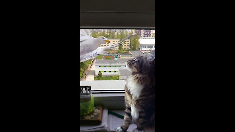 Kitty is bravely facing the seagulls that are flying to the window