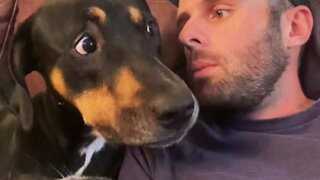 No nonsense dog doesn't want to hear about warranties