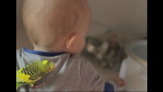 A Beautiful Baby Plays with his Friend Bird