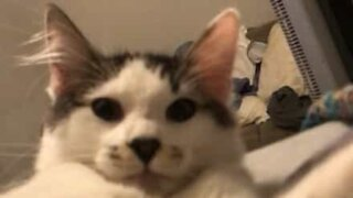 Cat shows owner who's boss!