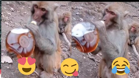 Monkey drink alcohol 😂 Try to not laugh 🙈