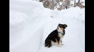 Washington Post Announced The Demise Of Winter - Again