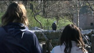 GAME WARDENS SEARCH FOR SHOOTER OF BALD EAGLE