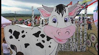 Cow for milk milking training