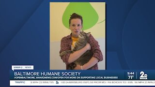 Jerome the cat is up for adoption at the Baltimore Humane Society