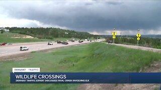 Denver7 Traffic Expert Jayson Luber discusses wildlife crossings after deadly crash