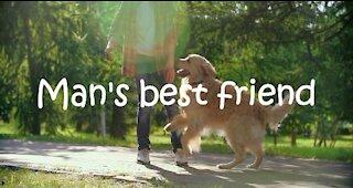Man's Best Friend - Do you agree?