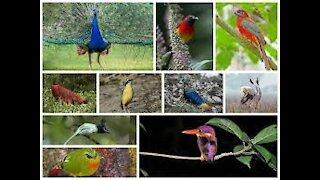 Relaxing birds sound