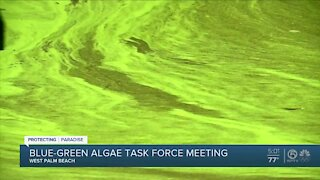 Task force discusses ways to combat algae issues in South Florida