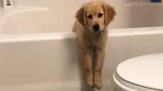 Curious dog gets stuck in bathtub