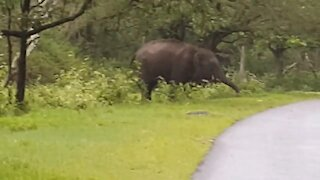 Elephant Attack in Kerala