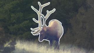 Elk Hunting Late Season! - Two bulls down!!